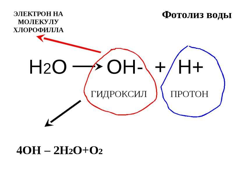 Уроки биологии: что такое фотосинтез
