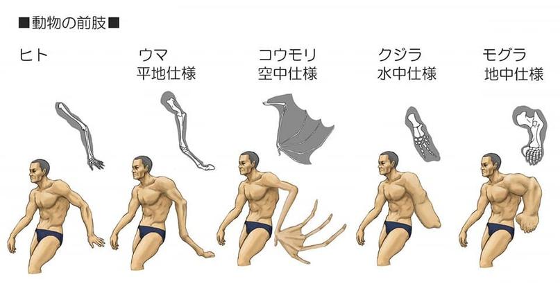 Сатоши накамото биткоин создавший. таинственный…