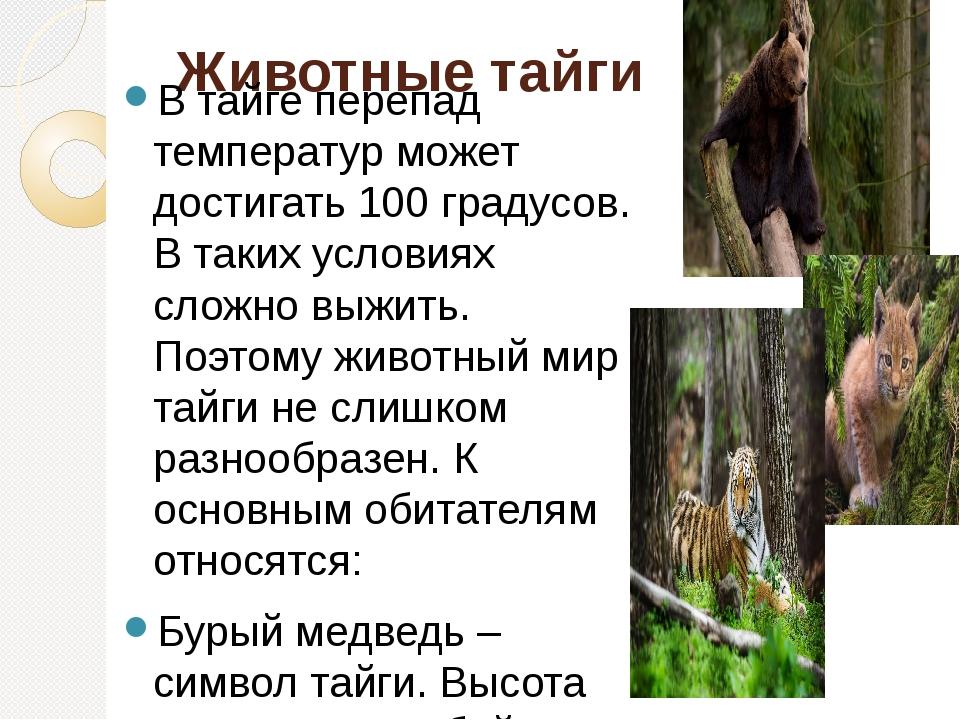 Где находится тайга: кто живет, деятельность человека, животные природной зоны | tvercult.ru