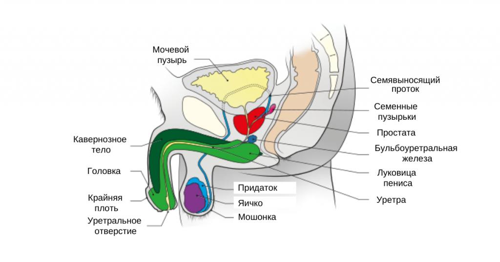 Бужирование уретры: что это такое и как делается процедура