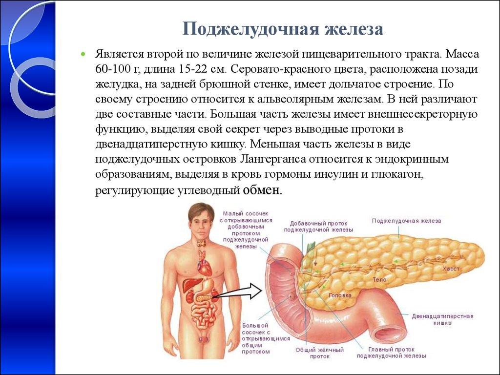 Липоматоз поджелудочной железы: признаки, лечение :: syl.ru
