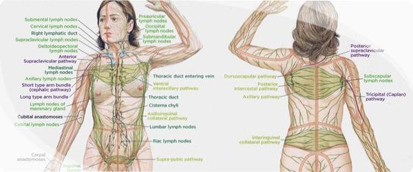 Лимфодренажный массаж лица и тела в домашних условиях, техники