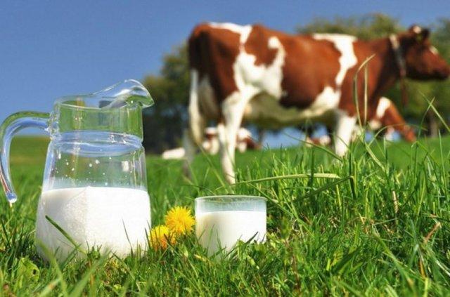 Что такое не молоко из овса из чего делают отзывы