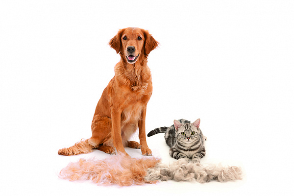 Сбросить лишнее – фурминатор для собак: что это такое, как пользоваться?