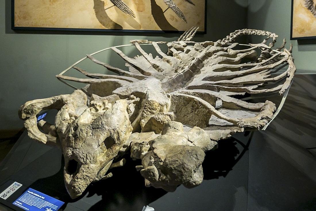 Палеонтология: что такое она изучает?
