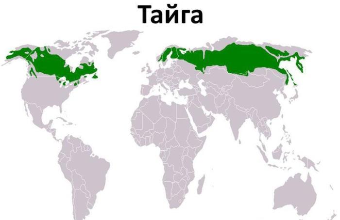 Тайга (станция) — википедия. что такое тайга (станция)
