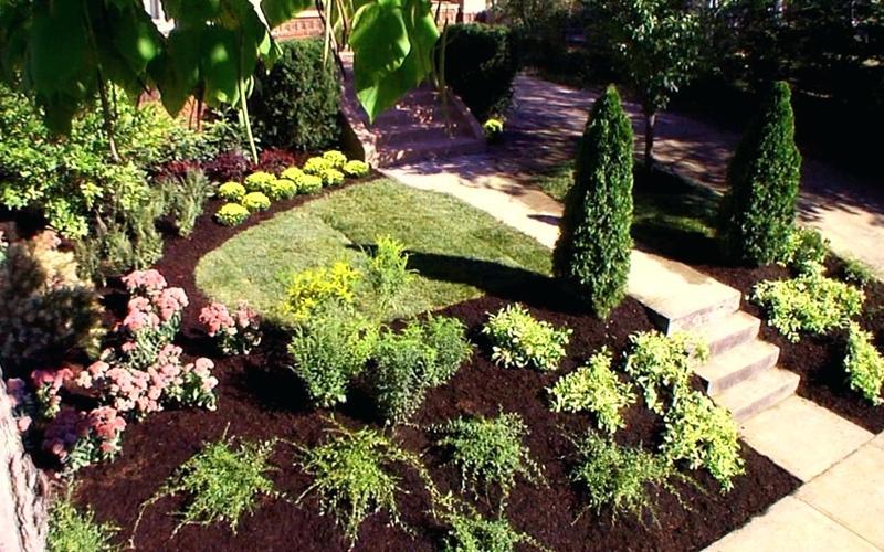 Особенности декоративных хвойных растений: 6 советов по выбору и уходу