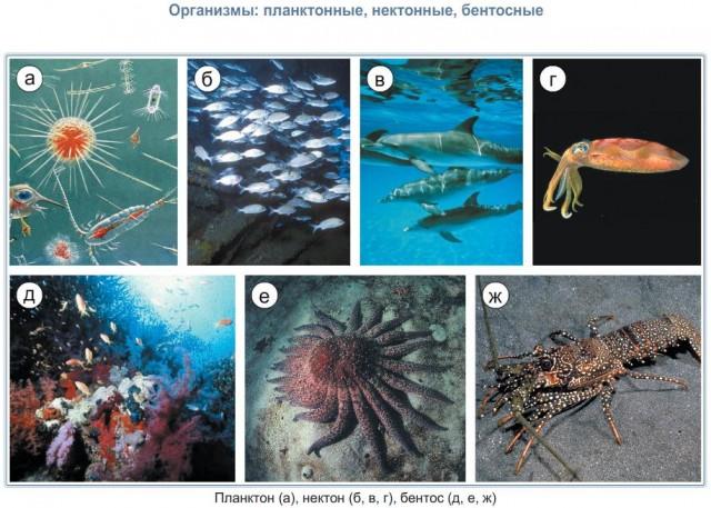 Нектон. рыбы. открытый океан, растительность, животный мир.