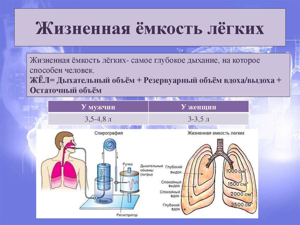 Роль дыхания и кислорода в нашем организме