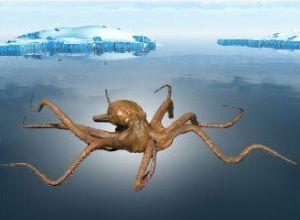 Кракен — легендарное чудовище из морских глубин