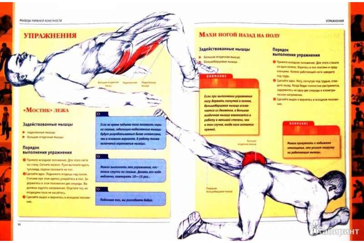 Мышцы кора: что это такое, упражнения