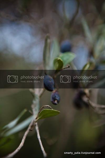 Чем полезны оливки для организма человека?