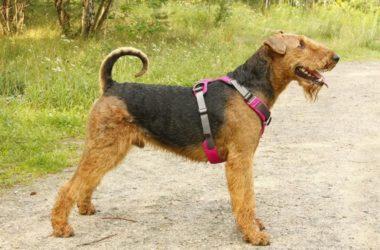 Как сделать надежную шлейку для собаки своими руками