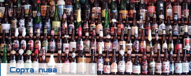 Что такое пиво, какие бывают виды