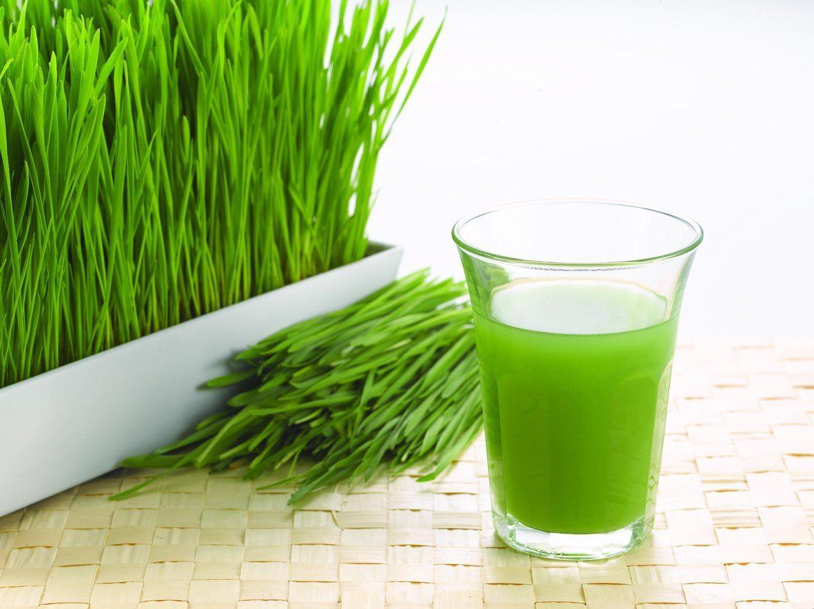 Витграсс – сок из ростков пшеницы: как приготовить и употреблять