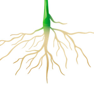 Польза проростков - способы проращивания и применение