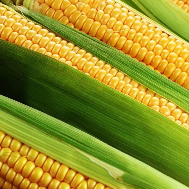 Кукуруза: вход в личный платежный кабинет карты евросети на kukuruza.ru