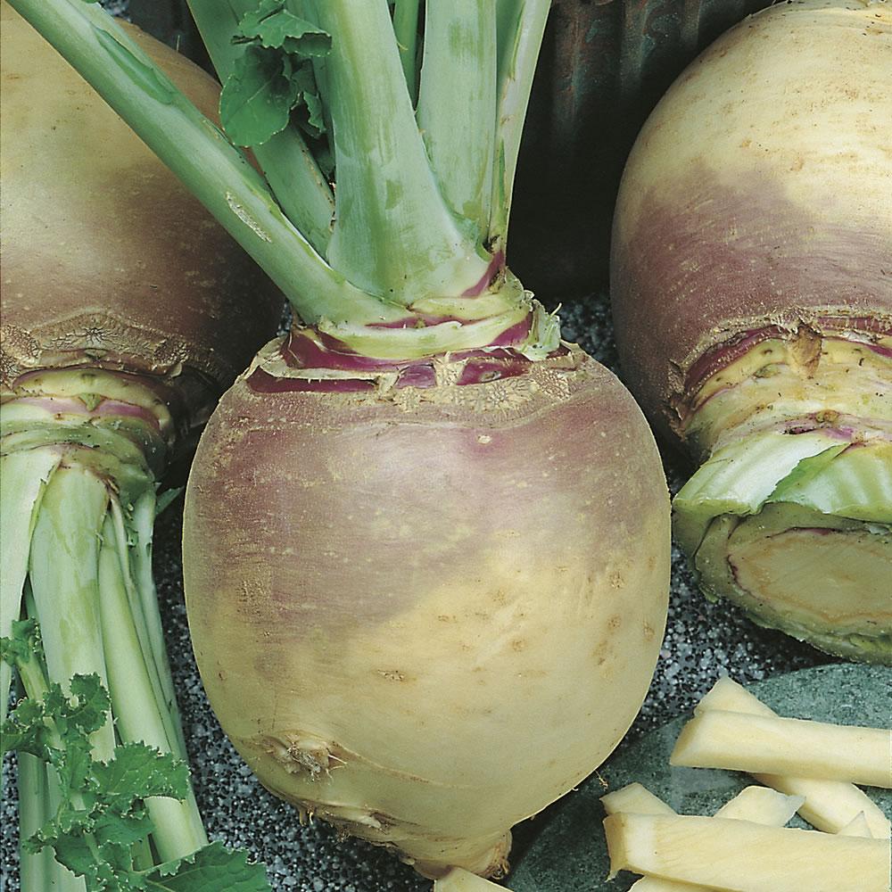 Турнепс - полезные свойства овоща, а также рецепты блюд из этой разновидности брюквы, виды и сорта