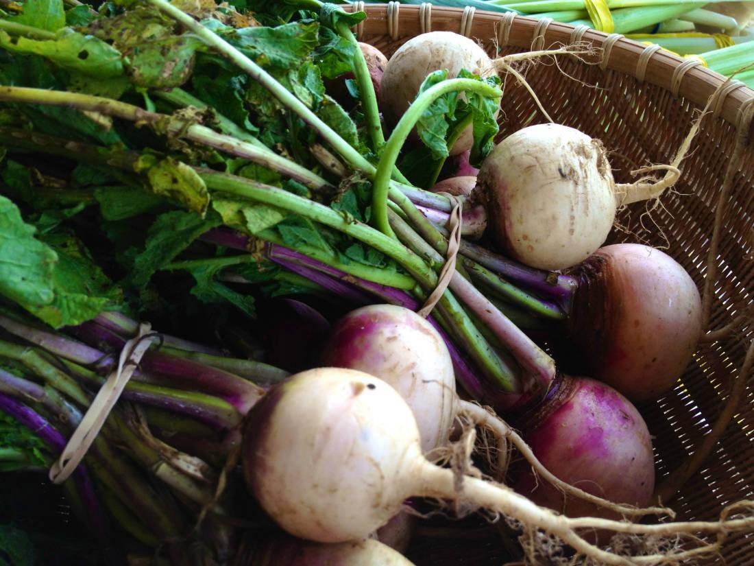 Турнепс: выращивание и уход в открытом грунте, посадка рассады
