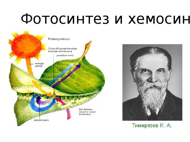 Хемосинтез - описание процесса, примеры организмов и уравнение — природа мира
