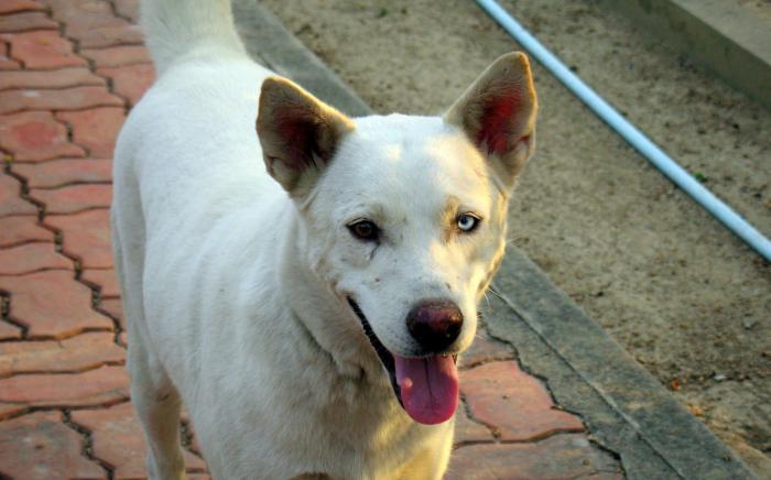 Инбридинг собак: что это такое, виды и особенности близкородственного скрещивания