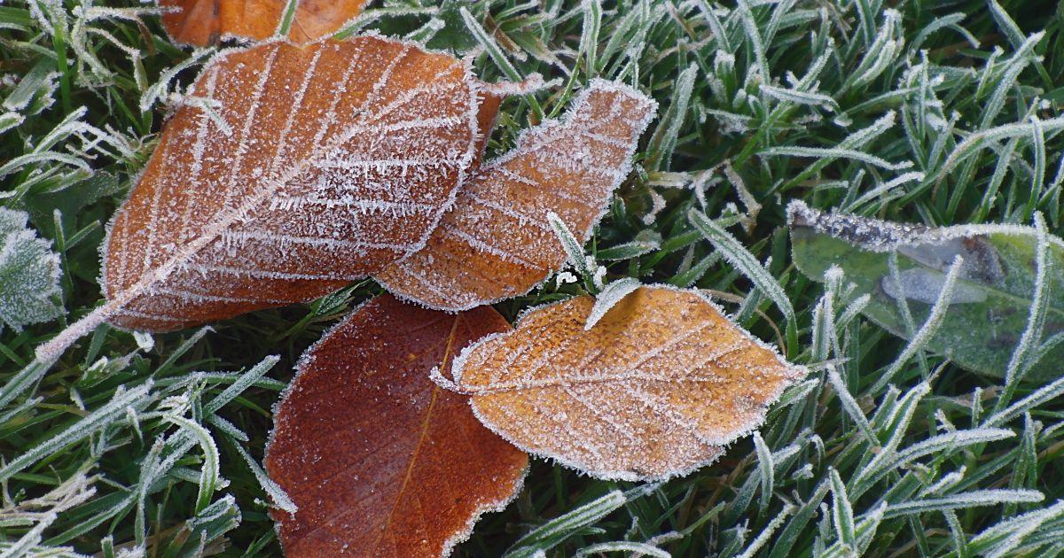Что такое заморозки и чем они опасны?