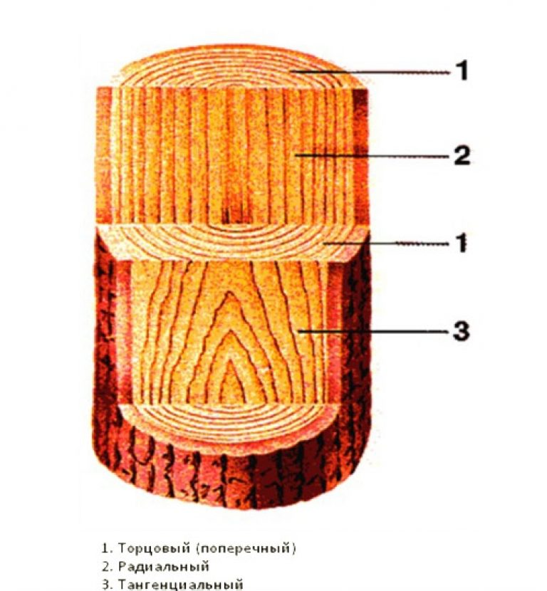Заболонь древесины