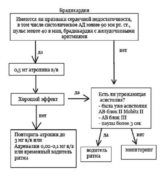 Лечение брадикардии народными средствами