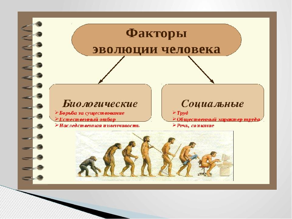 Теория биологической эволюции и генетическое разнообразие