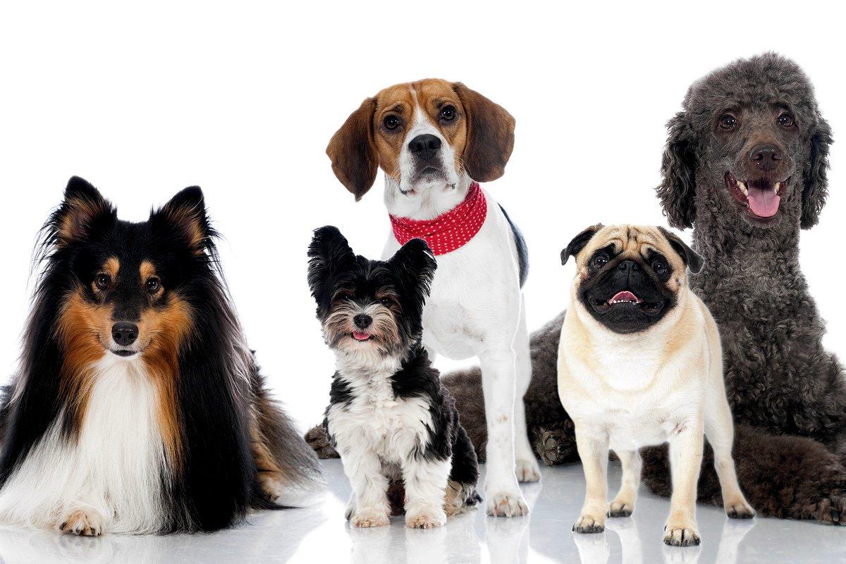 Собака (животное) — циклопедия