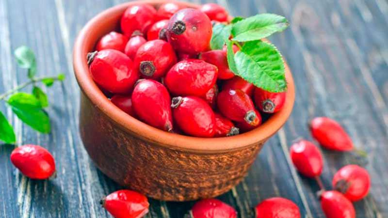 Шиповник майский или коричный - rosa majalis herrm.