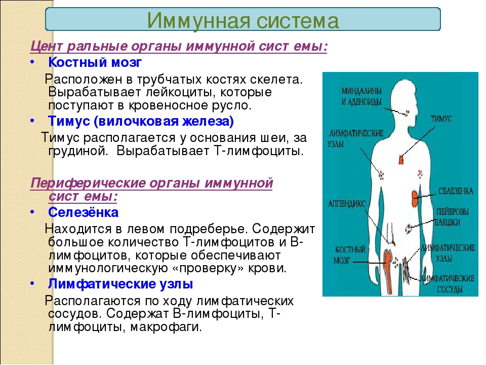 Что такое иммунитет › клиника «форпост»