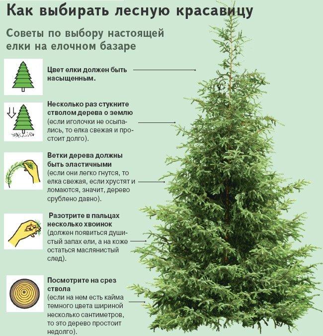 Как пользоваться елеем и что такое елей? :: syl.ru