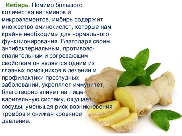 Имбирь (zingiber). описание, виды и выращивание имбиря