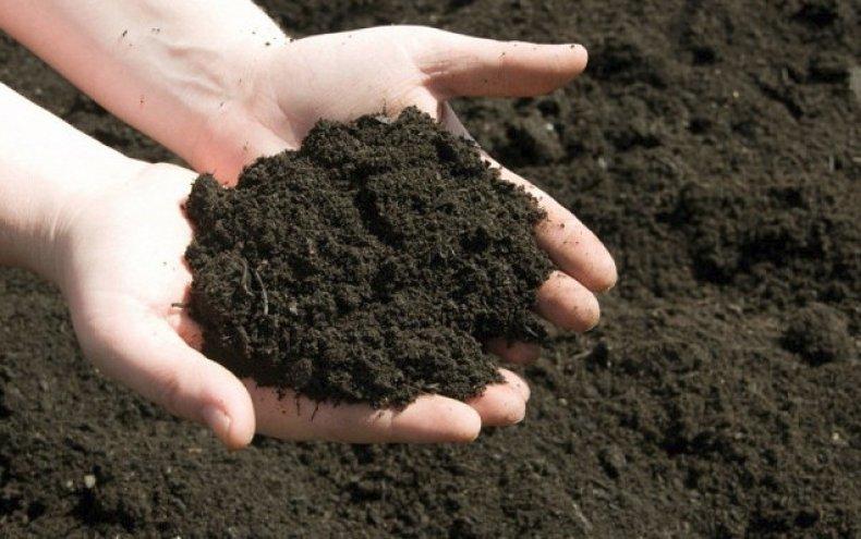 Органическое земледелие: создать чудо руками человека!