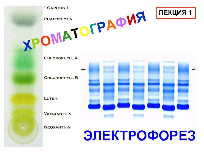 Хроматография — википедия