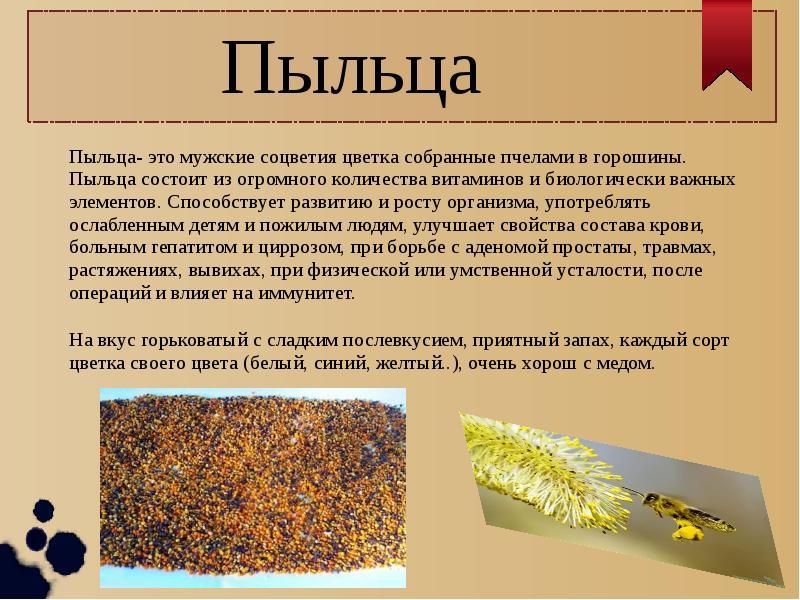 Перга пчелиная: полезные свойства, как принимать, купить, пыльца
