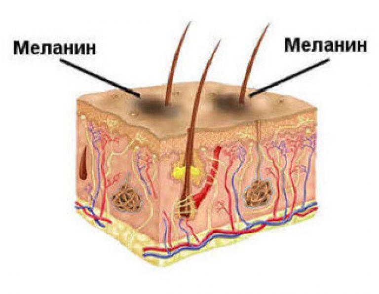 Меланин: что это такое, его функция, симптомы дефицита и переизбытка пигмента