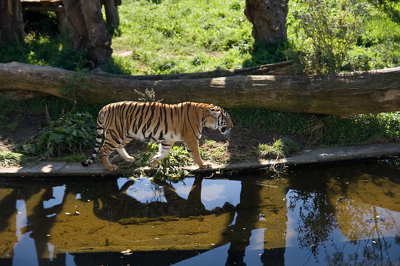 Что такое современный зоопарк