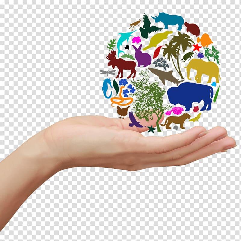 """Конспект """"биологическое разнообразие"""" - учительpro"""