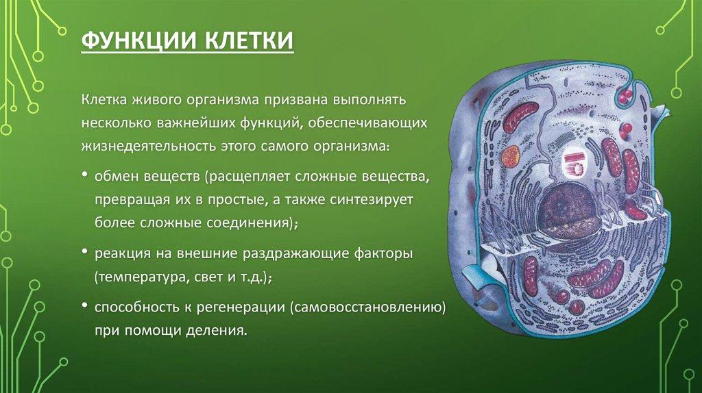 Что такое клетка