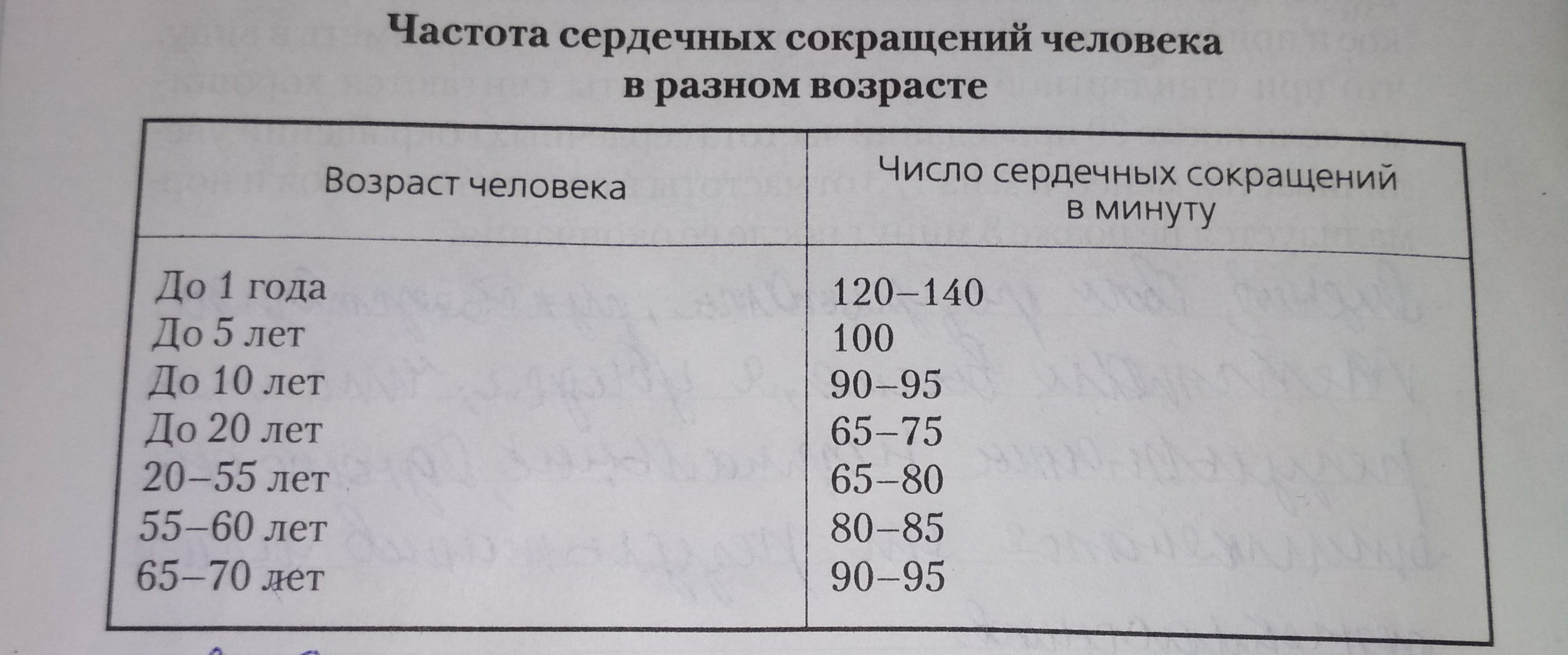 Чсс и пульс в чем разница, от чего зависит чсс, как и где измеряется, норма чсс — сердце