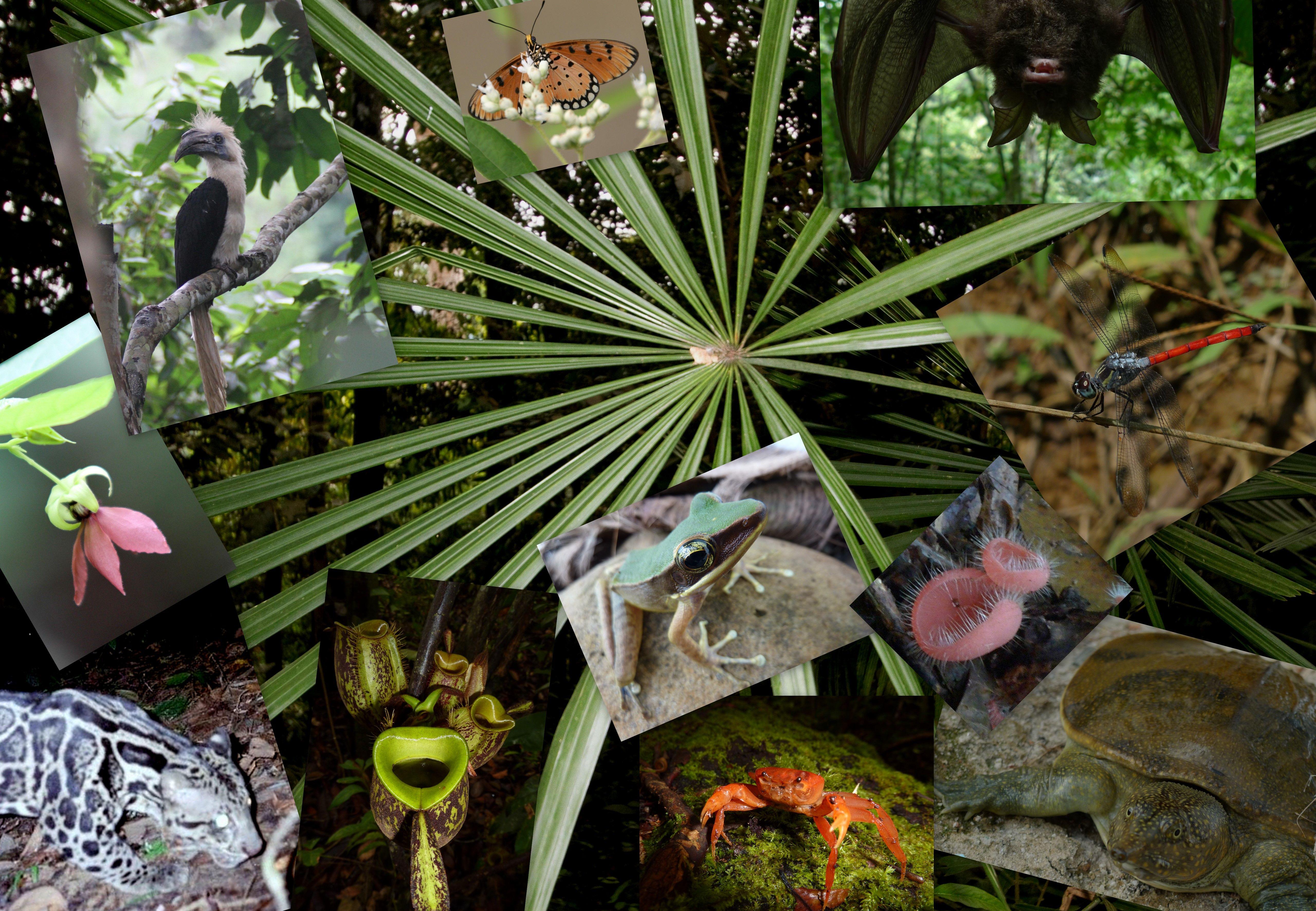 Виды, роль, снижение и охрана биологического разнообразия