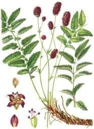 _семена