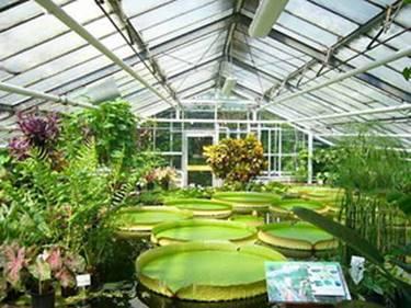Сад — википедия. что такое сад