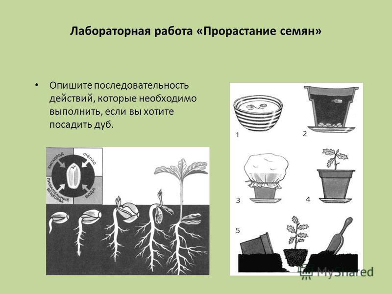 Проростки   как и какие проращивать