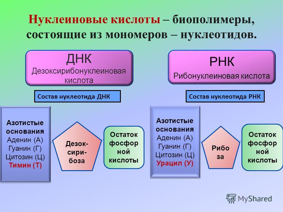 Нуклеиновая кислота — википедия с видео // wiki 2
