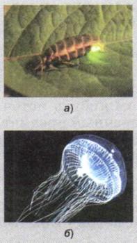 Тест по физике световые явления 8 класс