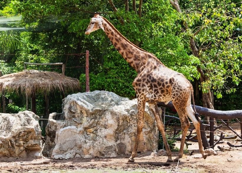Самый большой зоопарк в россии. московский, ростовский и новосибирский зоопарки