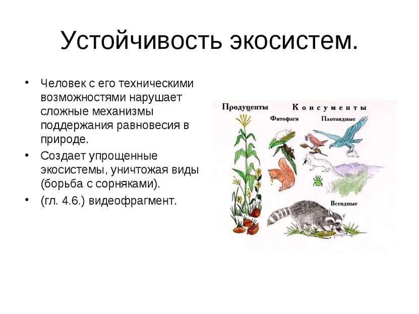 Саморазвитие экосистемы